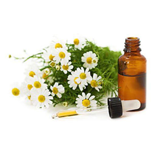 TINH DẦU CÚC TRẮNG LA MÃ NGUYÊN CHẤT ( Chamomile essential oil )