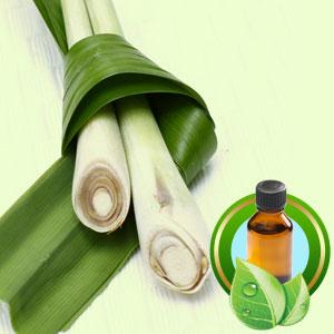 TINH DẦU SẢ CHANH NGUYÊN CHẤT ( Lemongrass essential oil )